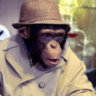 Half_Trained_Monkey