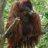 Whyarecarrots